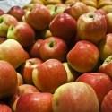 manzanas - Consumo local, consumo global, CO<sub>2</sub/> y otras cuestiones. Los viernes de Ecología Cotidiana