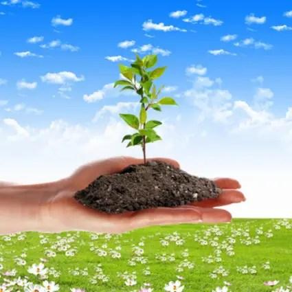 """brotes - SIN BARBECHO: """"La mente humana es como la tierra; los pensamientos son las semillas"""""""