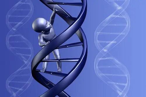 niñoADN 500x333 - El ADN transmite la memoria de nuestros antepasados, nuevo estudio científico