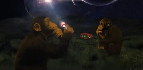 monosmonguis2 500x245 - Los monos de Africa comieron monguis y llegó la Humanidad, teoría de la evolución