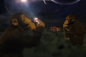 monosmonguis2 - Los monos de Africa comieron monguis y llegó la Humanidad, teoría de la evolución