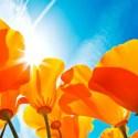 flores - Los colores que no ven los ojos