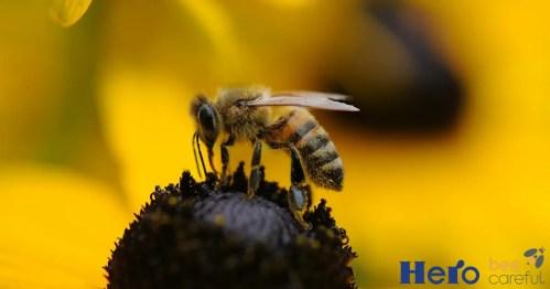 abeja en flor - abeja en flor