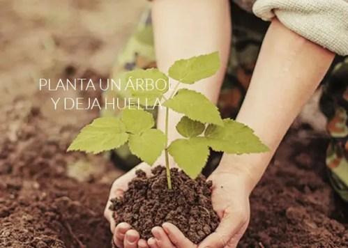 planta un árbol - planta un árbol