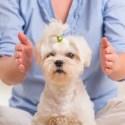 Depositphotos 47495833 s 2015 - Reiki para animales