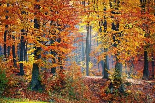 bosque en otoño - bosque en otoño