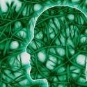 regeneración neuronal - Cannabis para la protección y regeneración neuronal