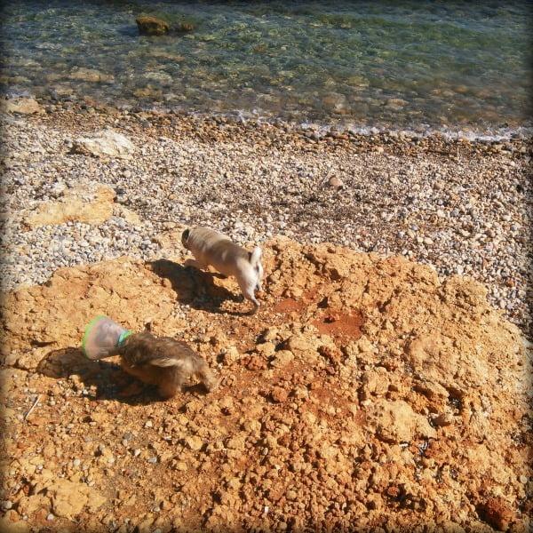 Uma en la playa
