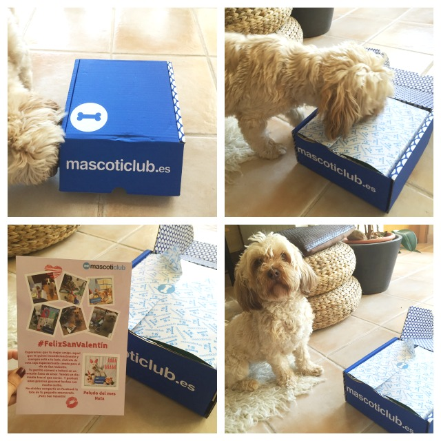 cajas de suscripción para perros