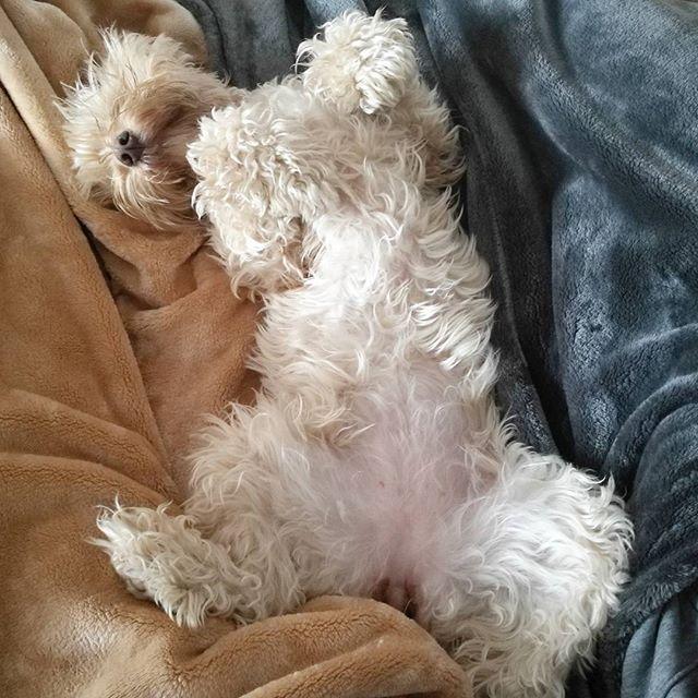 cuánto debe dormir un perro