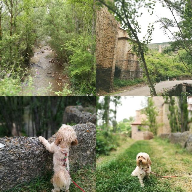 viajar con perro a Yanguas