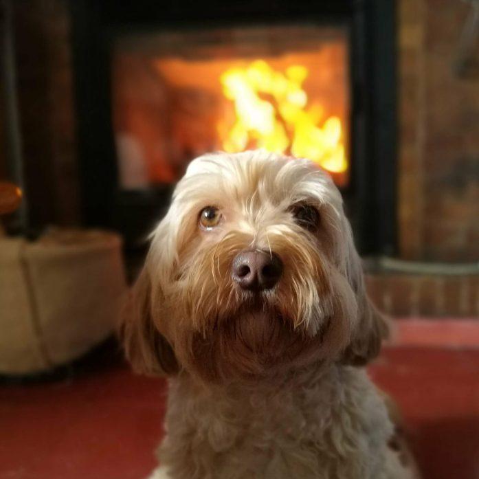 climatizar el hogar con perro