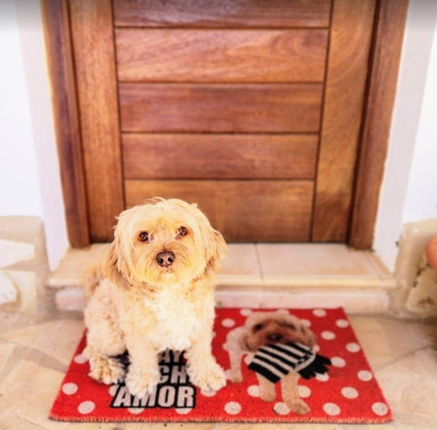 felpudos personalizadas con la imagen de tu perro