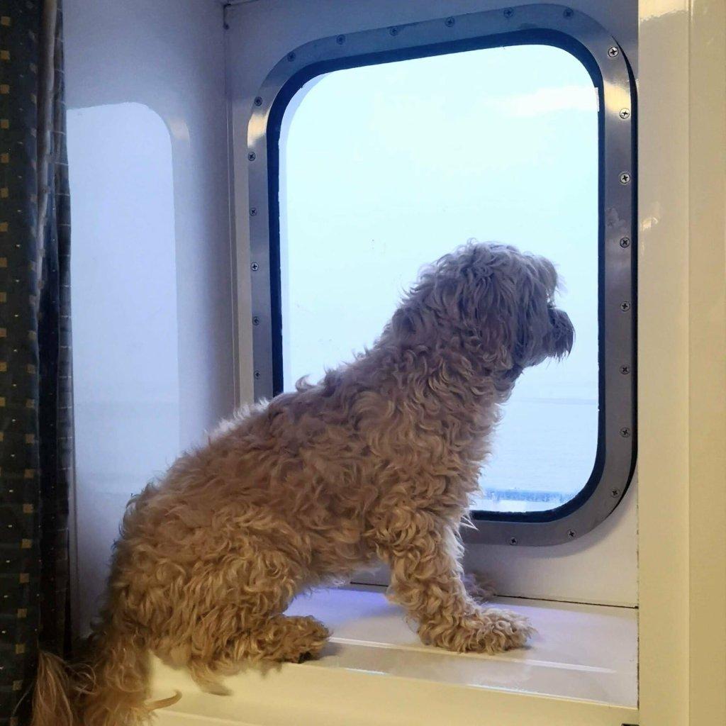 viajando con perro con Balearia