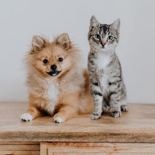 desparasitar gatos y perros