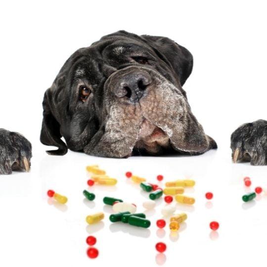 productos para perros que puedes encontrar en farmacias