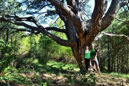 el boixar rutes senderisme senderismo tinença de benifassà trekking trailrunning pi 12 branques