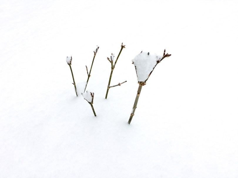Tiny branches