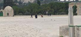 الاحتلال ينفذ أعمال حفريات في المسجد الأقصى وقبة الصخرة