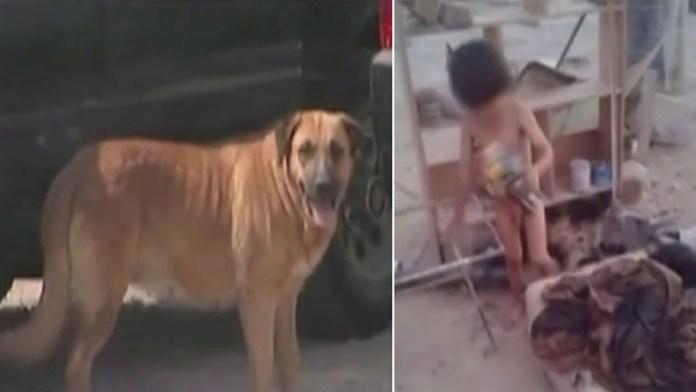 perra amamanta a bebe y salva su vida