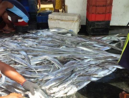 Venezuela inició exportación de pescado y sal a Trinidad y Tobago