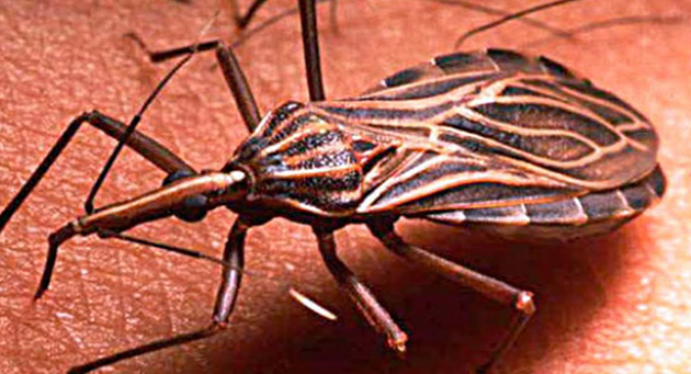 Chile libre de Chagas