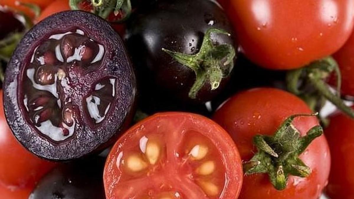 (Foto) Científicos chinos desarrollan tomate púrpura con manipulación genética