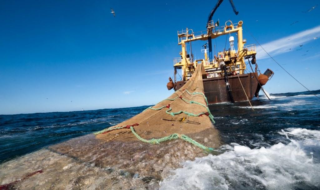 En medio de crisis por Covid-19 Gobierno autorizó a industria pesquera a elaborar harina y aceite de pescado con especies para consumo humano