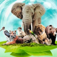 Feuerland descubre su nuevo proyecto, Ark Nova y su construcción de Zoológicos