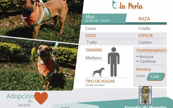 Miel está en adopción en La Perla. FOTO CORTESÍA