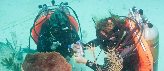 Resultado de imagen para estudio de los oceanos