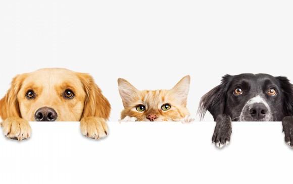 Resultado de imagen para mascotas