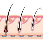 Estructura de la piel y del cuero cabelludo