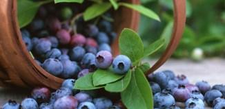 arándano azul propiedades salud