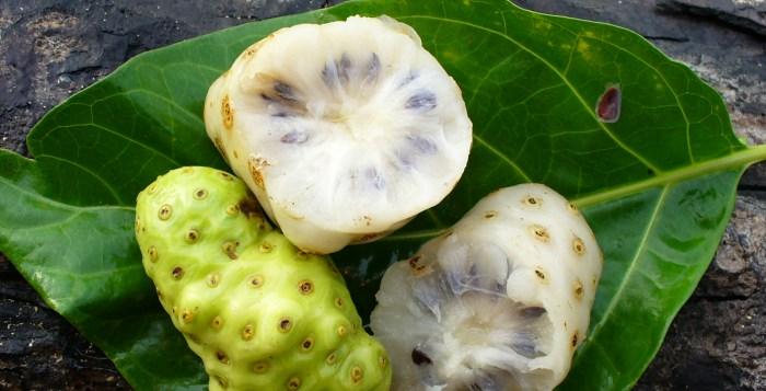propiedades del noni planta medicinal