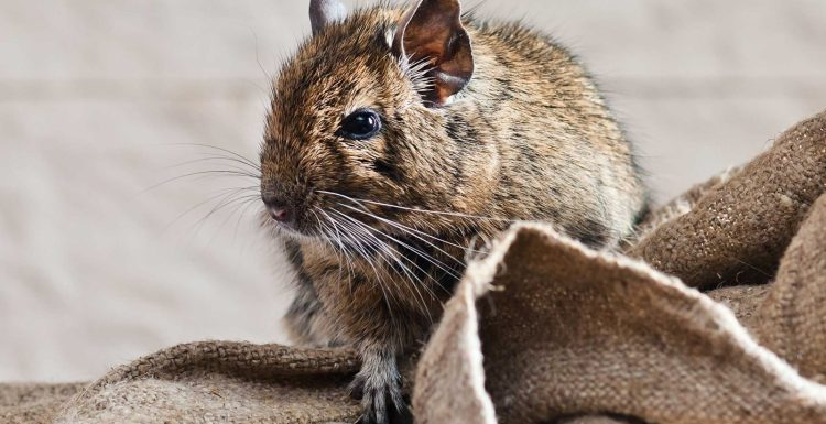 شركة مكافحة فئران فى جدة