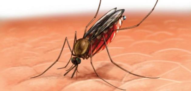 مكافحة الحشرات والبعوض فى جدة