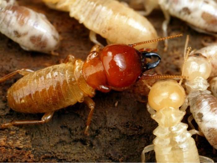 شركة ابادة حشرات بجدة