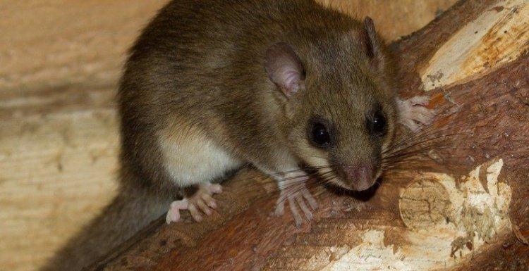 اساليب مكافحة الفئران بجدة