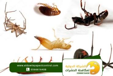 الحشرات المنزلية وطرق القضاء عليها