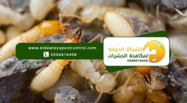 النمل الابيض في البيت