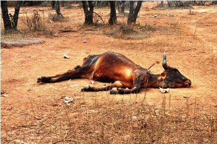 Die-But-Thousand-Thousands-By-The-Devastating-Drought
