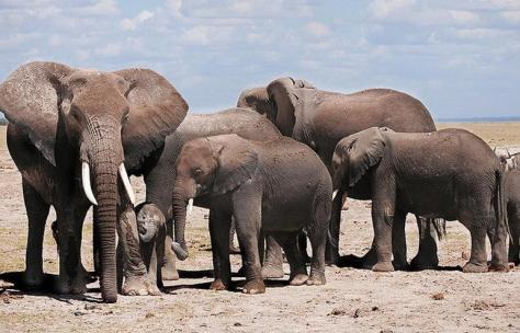 En 2015 la WAZA apoyó expresamente la captura en África de elefantes bebés que vivían en la naturaleza para llevarlos a zoos norteamericanos
