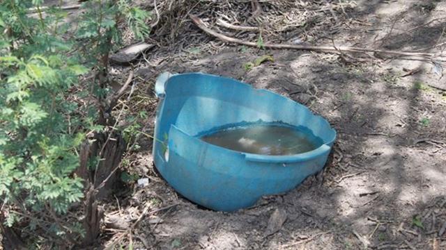 Agua II
