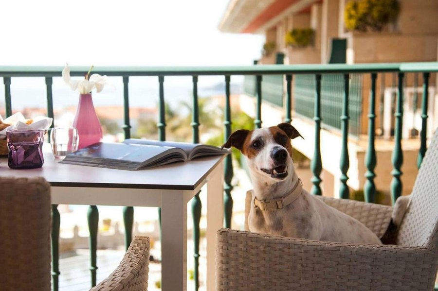 hoteles mascotas