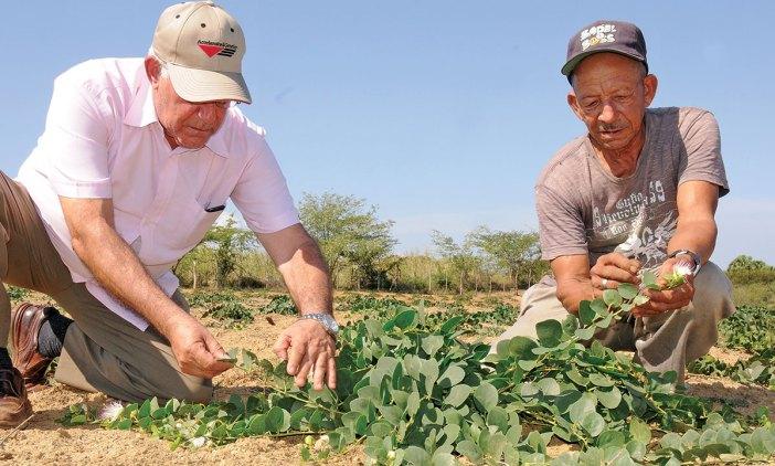productores alcaparras guayubin
