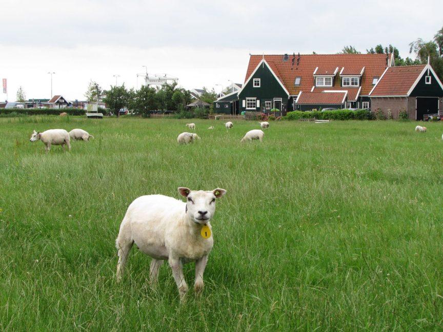 Excursión a Marken y Volendam desde Amsterdam