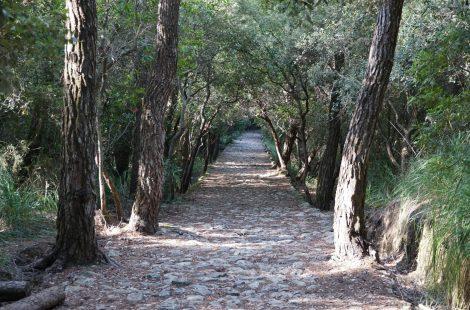 Camí des Correu, Esporles a Banyalbufar