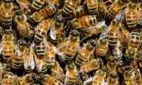 اختفاء الحشرات يسبب كارثة للعالم