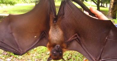 H5P Column Bat